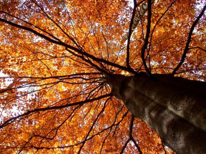 Baum_himmel_2